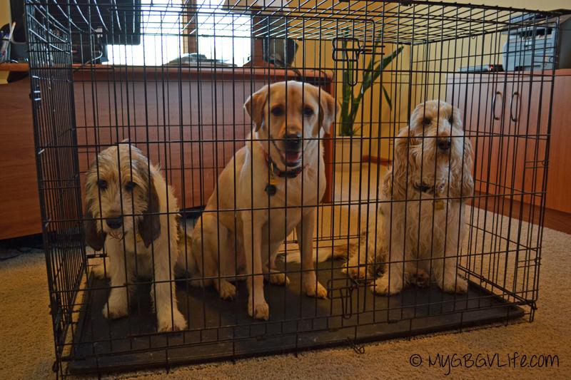 My GBGV Life dog jail