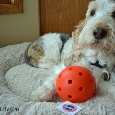 Balls, Collars, Awards, Oh My! | GBGV | Barks and Bytes