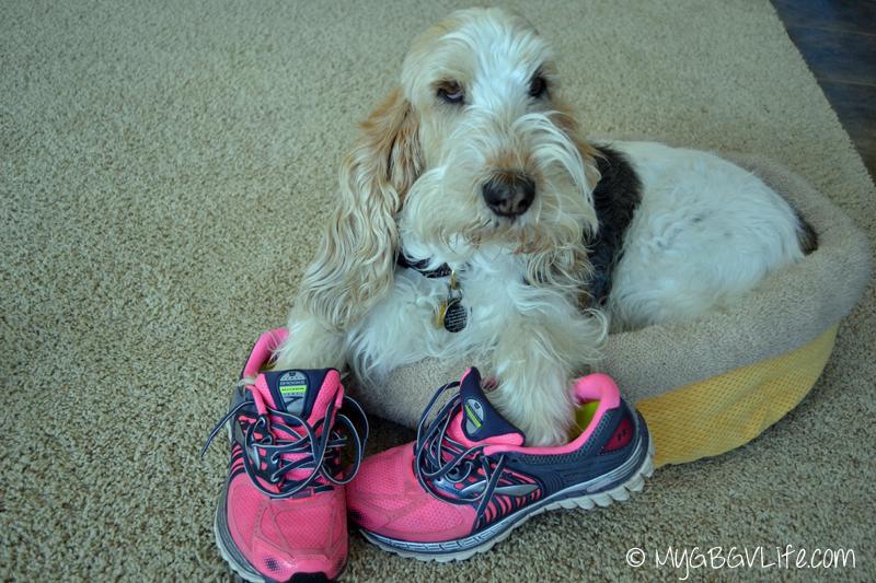 My GBGV Life jogging dog