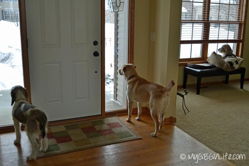 My GBGV Life watch dogs