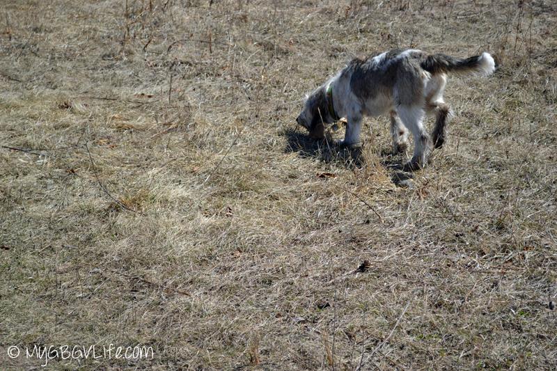 My GBGV Life puppy with mud