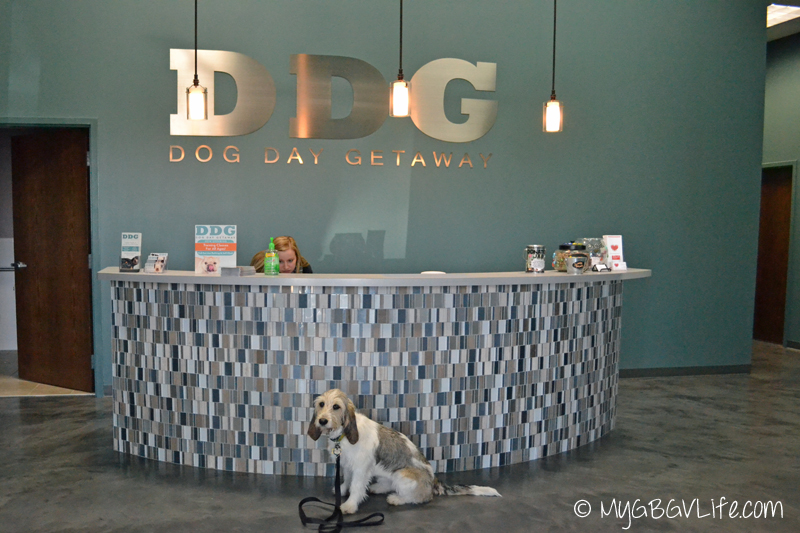 My GBGV Life Bailies first day at Doggie Day Care