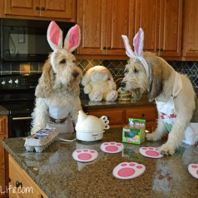 Dog Bunnies Color Easter Eggs | GBGV | Monday Mischief