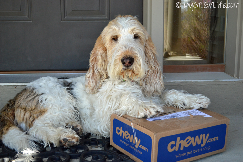 My GBGV Life receiving her tasty treats from Chewy.com