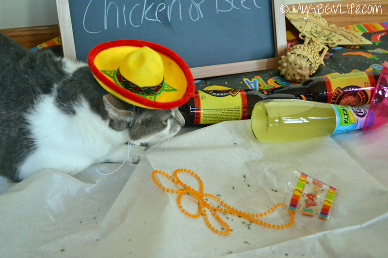 My GBGV Life Bert the cat joins in the Fiesta celebration
