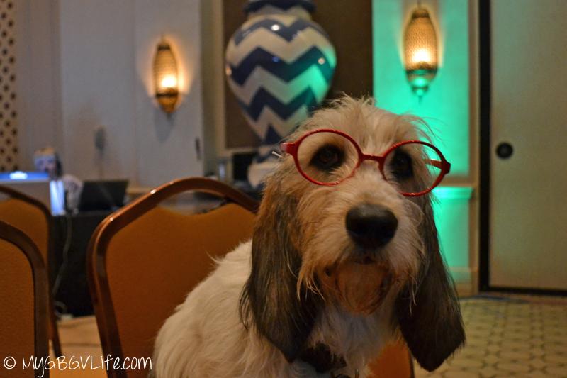 My GBGV Life Bailie the PR Dog