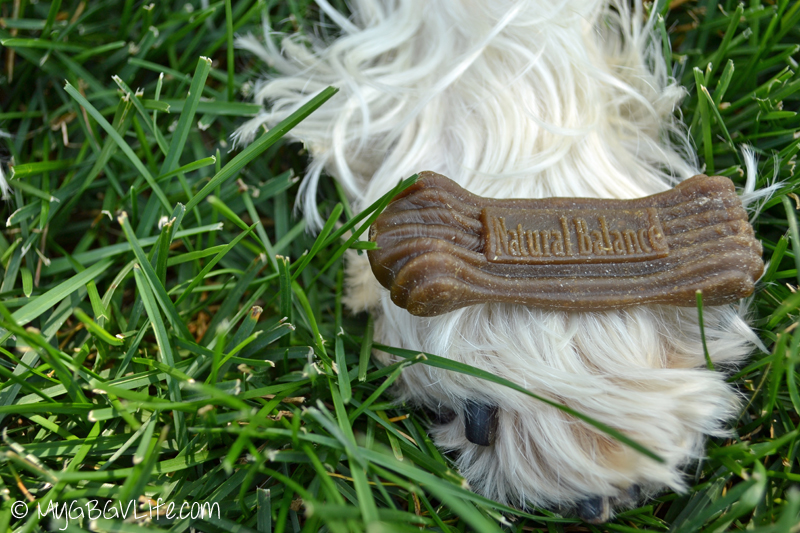 My GBGV Life chewy.com natural balance dental chews from the delivery dog