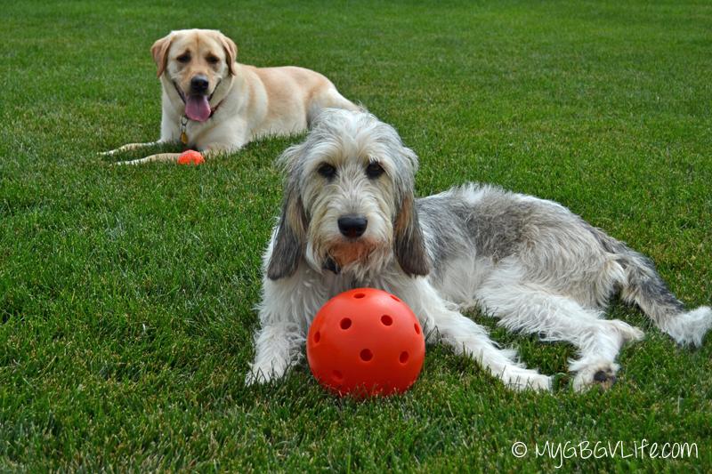 My GBGV Life Bailie and Lena mix and match balls