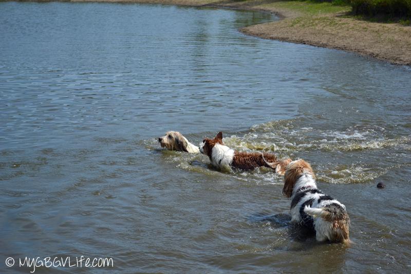 My GBGV Life Bailie Emma adn a friend swimming