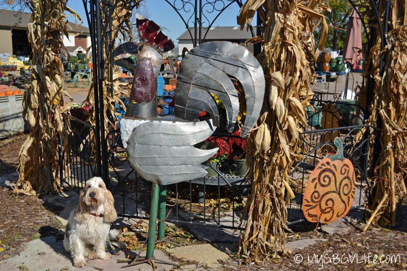 My GBGV Life giant chicken at the garden center