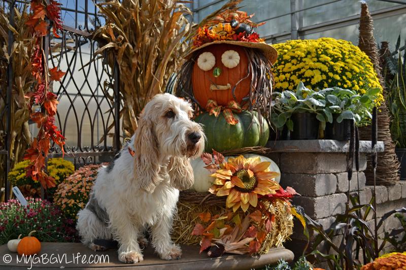 My GBGV LIfe with pumpkin lady