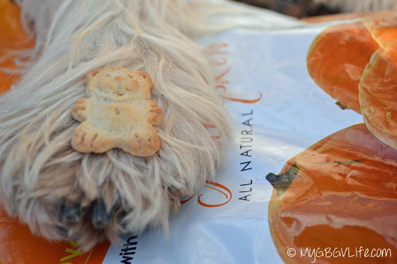 My GBGV Life pumpkin bear cookies