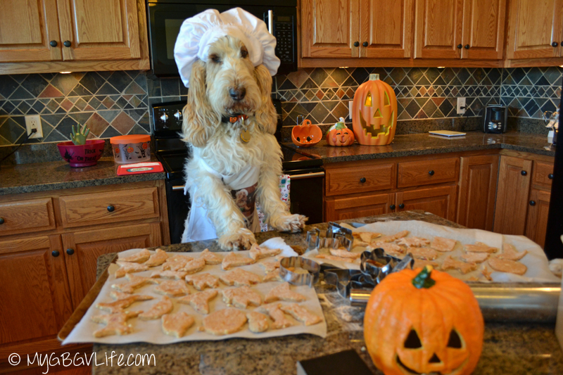 My GBGV Life Emma checks the Halloween cookie cut outs