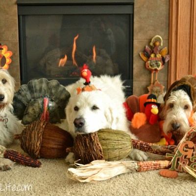 Happy Thanksgiving #ShareGratitude