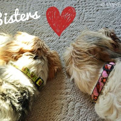 GBGV Sister Love