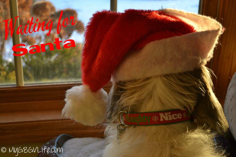 My GBGV Life Bailie is waiting for santa