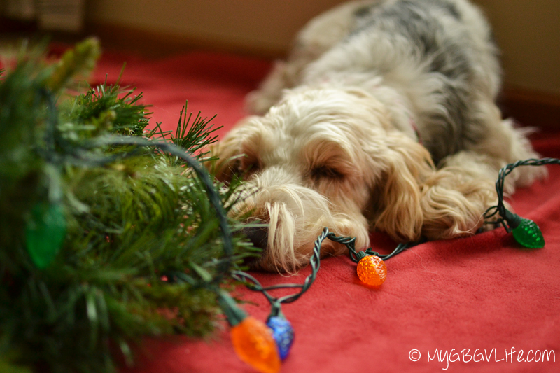 My GBGV Life napping while making a wreath