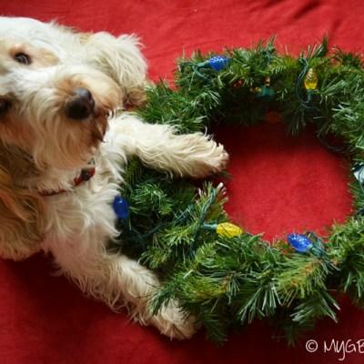 DIY Dog In Wreath