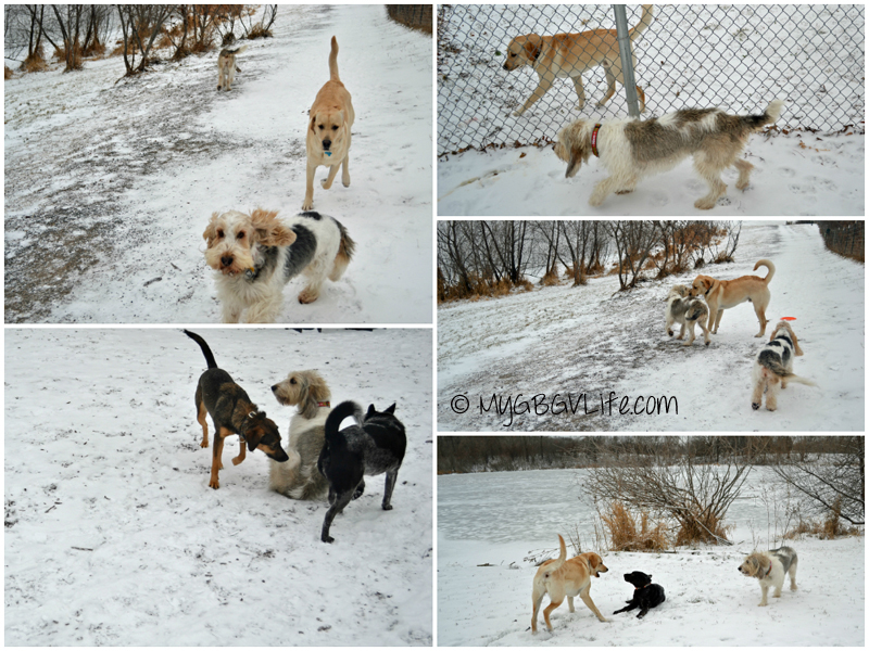 My GBGV Life friends at the dog park