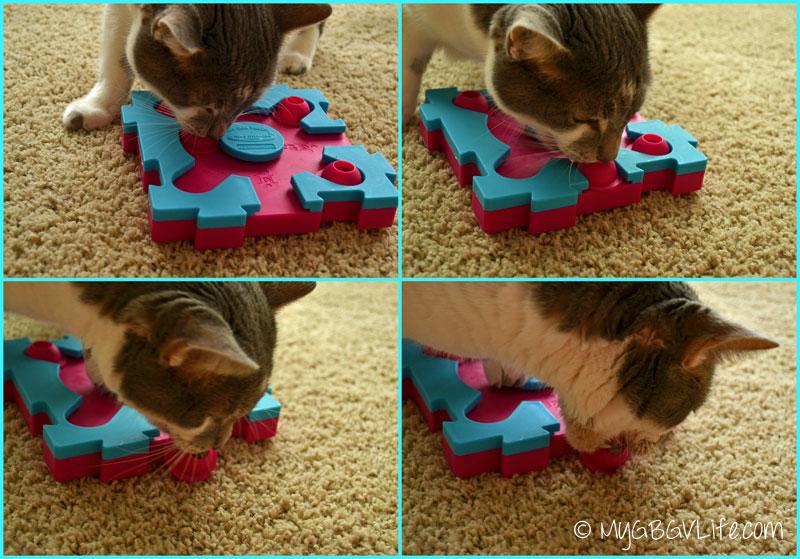 My GBGV Life cat bro Bert cheating