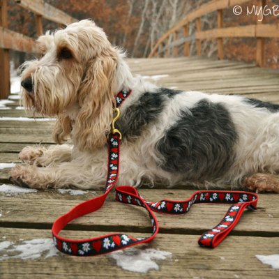 Fashionable Dog Collars And Leashes