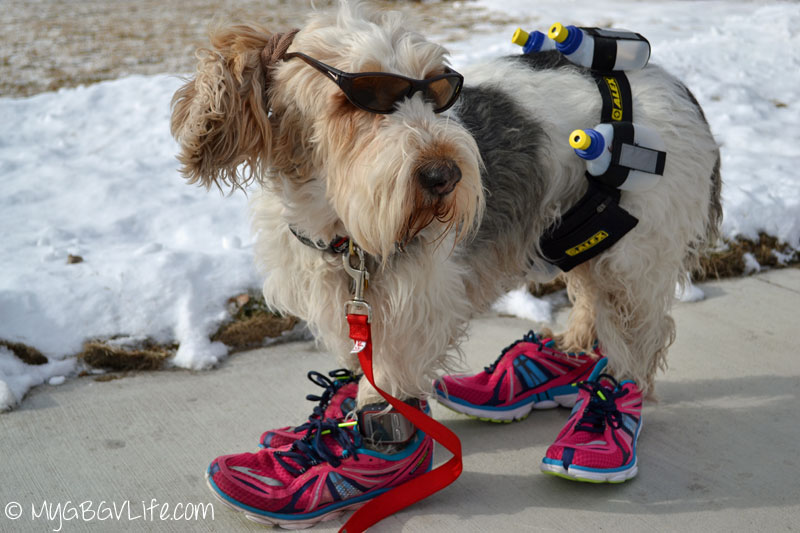 My GBGV Life 10 reasons to run with your dog