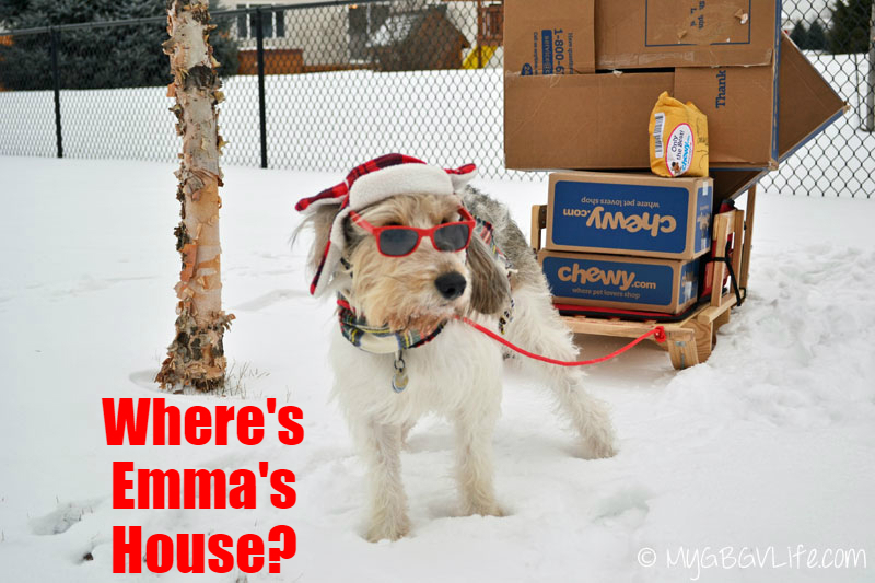 My GBGV Life chewy delivers in extreme weather