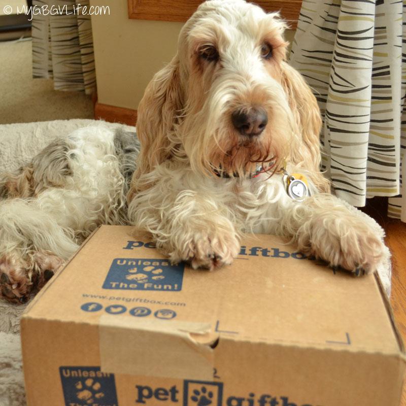 My GBGV Life Pet Gift Box Fun