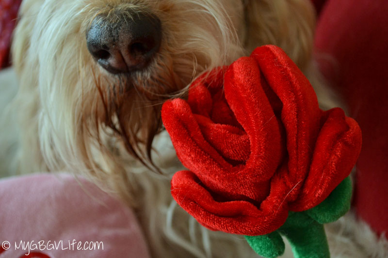 My GBGV Life love sniffing roses