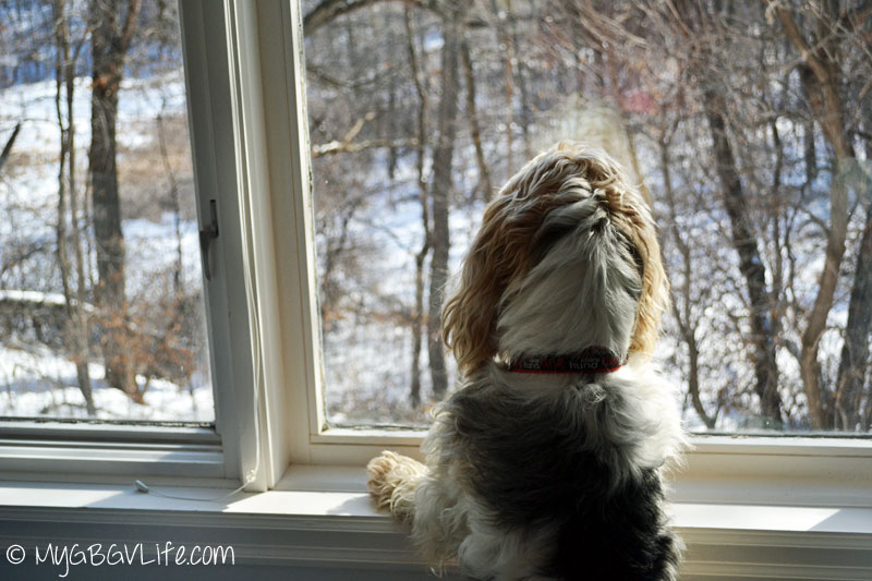 My GBGV Life watching squirrels at Gramma's house