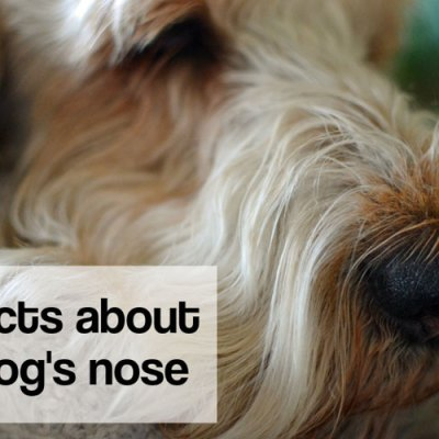 5 Facts About A Dog's Nose