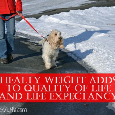 Is Your Dog A Healthy Weight #PerfectWeight