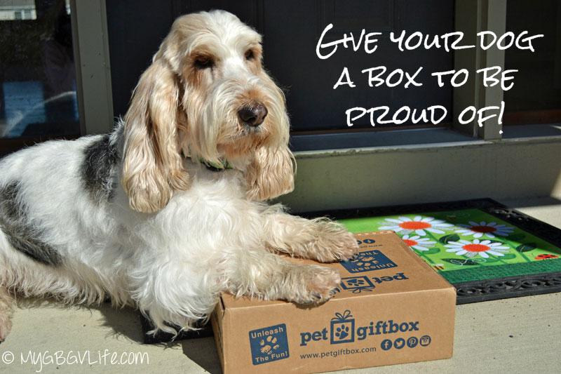 My GBGV Life Pet Gift Box basketball theme