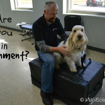 Is Your Dog Well Adjusted