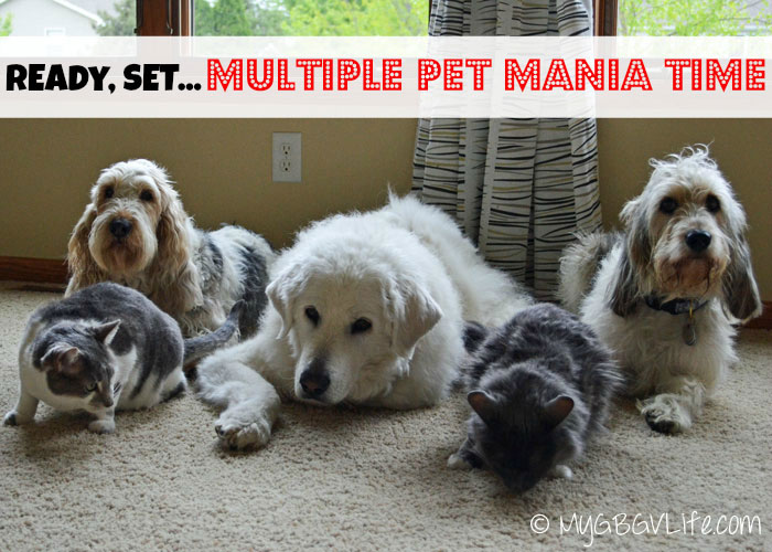 My GBGV Life Multiple Pet Mania