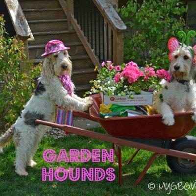 Garden Hounds At Work
