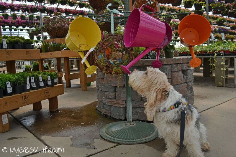 My GBGV Life watering cans for flowers