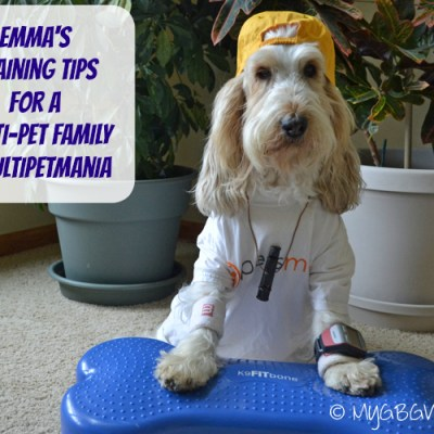 Training Tips For Multiple Pets #MultiPetMania