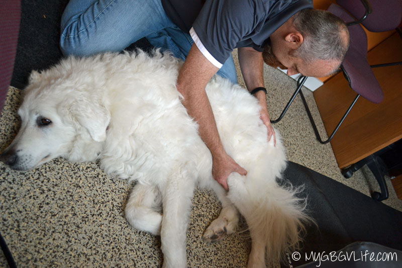 My GBGV Life animal chiropractor adjusts leg