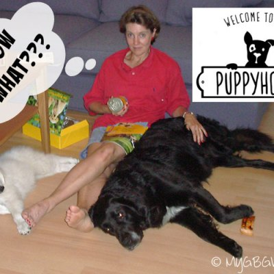 Are You Prepared For A Puppy #MyPuppyHood