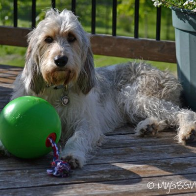 The Versatile Tuggo Dog Toy {Giveaway}