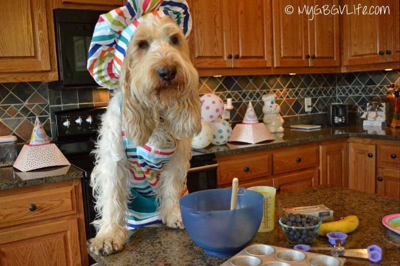 My GBGV Life happy baker dog