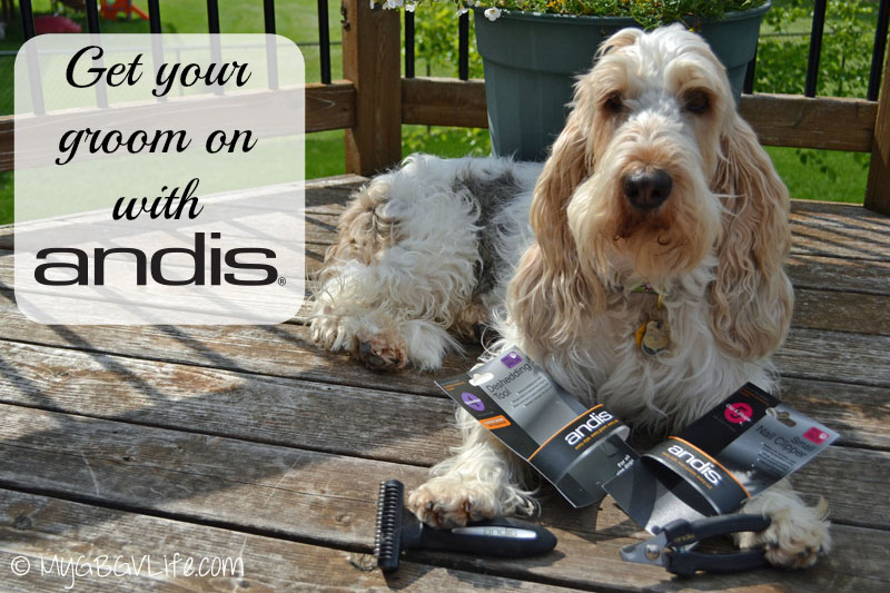 My GBGV Life with andis grooming tools