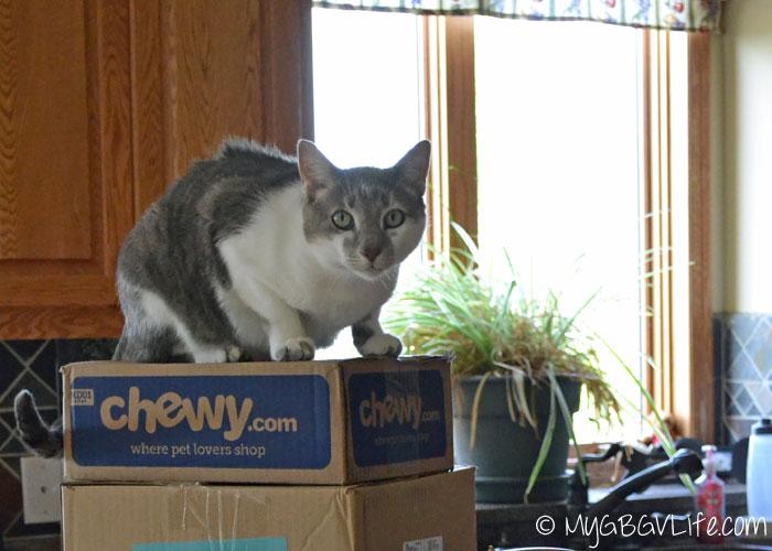 My GBGV Life cat on the box