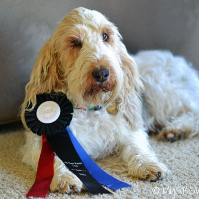 5 Tips To Keep Your Dog Cool At A Summer Competition