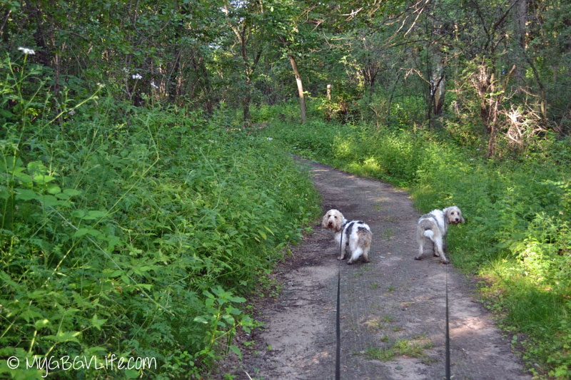 My GBGV Life walking at Whitetail Woods Regional Park