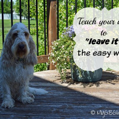 "How To Teach Your Dog To ""Leave It"""