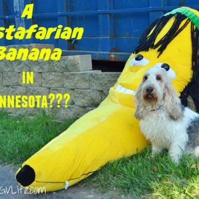 A Rastafarian Banana Caper in Minnesota?