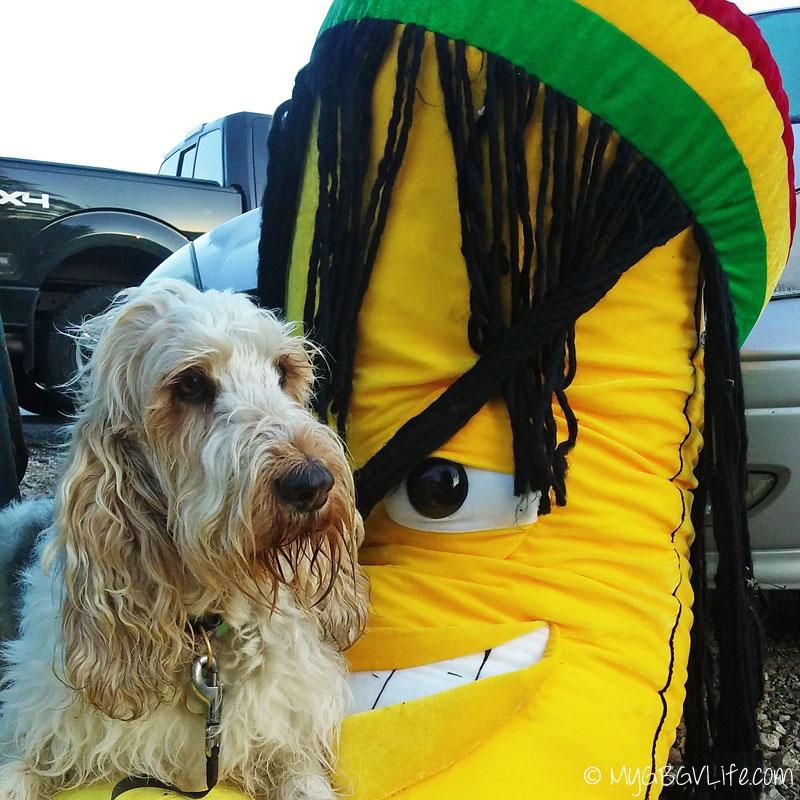 My GBGV Life holding the Rastafarian banana