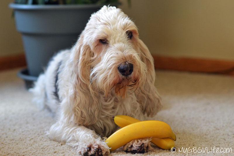 My GBGV Life Emma with regular bananas